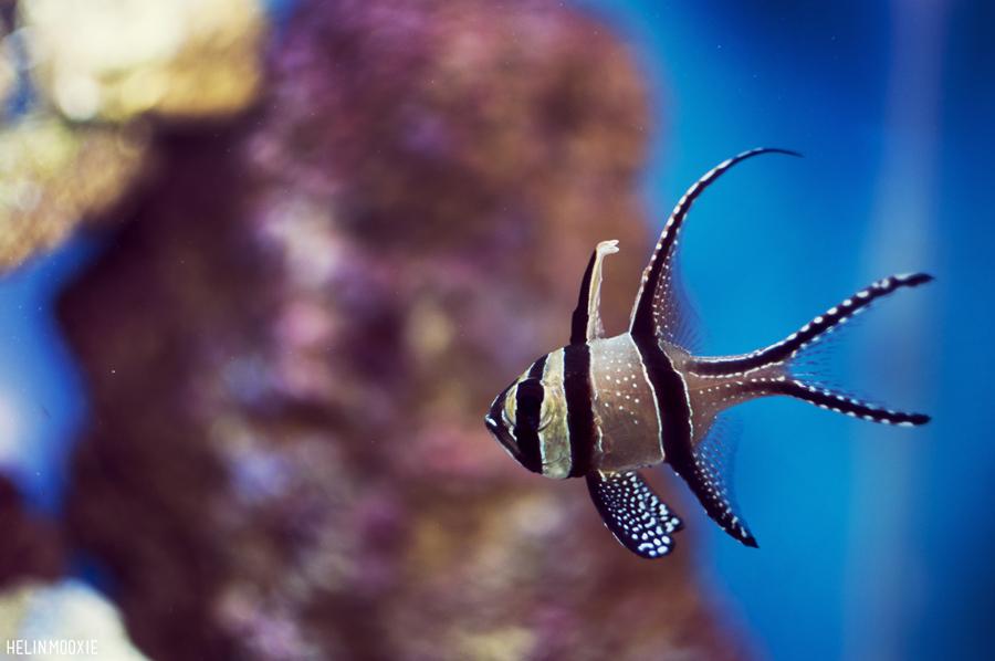 Saltwater Fish - Clarks Pet EmporiumClarks Pet Emporium