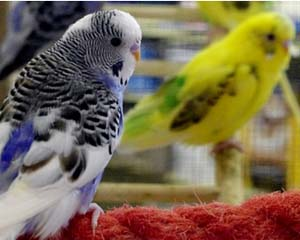 Albuquerque's BEST Selection of Pet Birds | Clark's Pet Emporium
