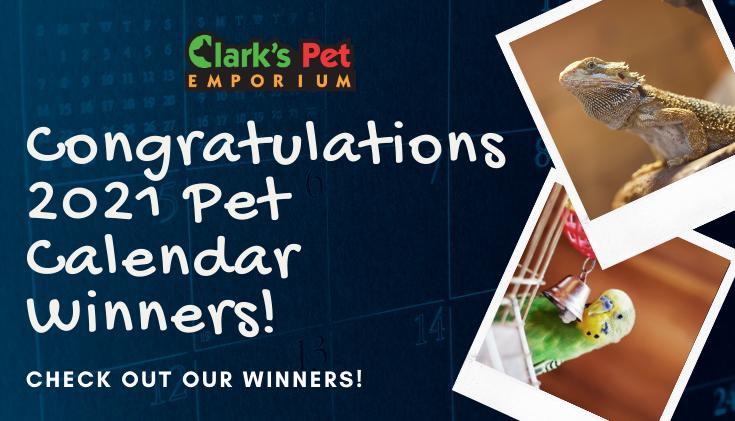 Congrats Calendar Winners
